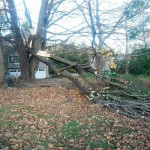 Sandy Causes Tree Damage in New Jersey