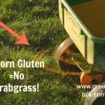 Corn Gluten: Crabgrass Be Gone