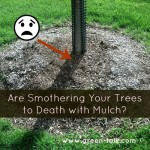 Are you Killing Your Trees with Mulch?