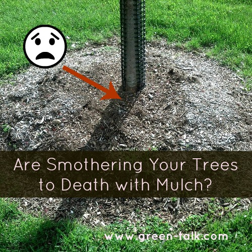 Killing Them Softly With Their Mulch >> Mulching Trees Are You Smothering Them To Death Green Talk