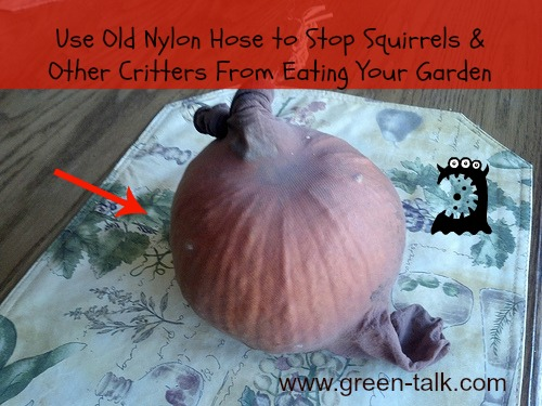 Nylon Hose Stop critters from eating your garden