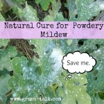 Natural cure of Powdery Mildew