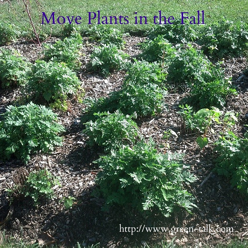 Move plants in the Fall