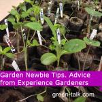 Garden Tips for Beginners