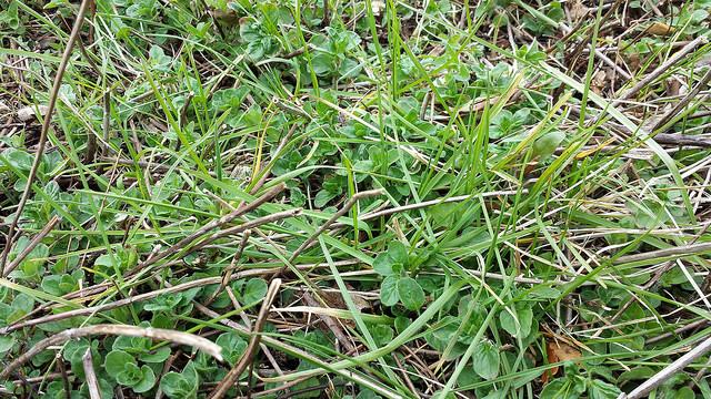 ntenance Tip-Remove Grass
