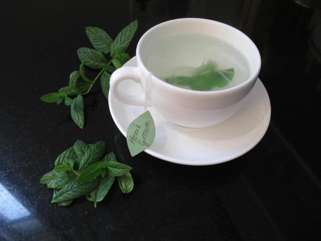 grow tea such as a mint plant