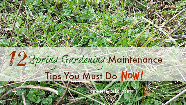12 Spring Gardening Maintenance Tips You Must Do Now