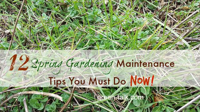 Spring Gardening Maintenance Tips