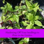 Hardening Plants for the Garden