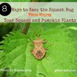 Squash bugs detrators