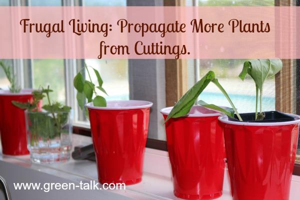 Propagate Plants