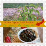 Green Pepper Leaf Recipe