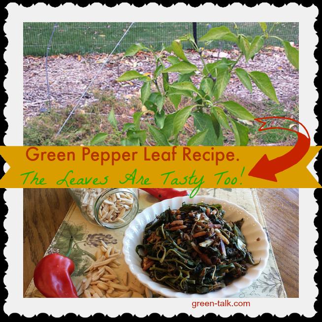 Green Pepper Leaf Recipe