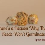 seed scarification