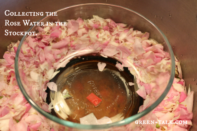 DIY rose water--collecting rose water in the stockpot
