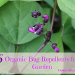 organic bug repellent in the garden