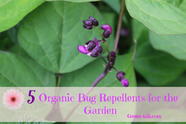organic bug repellent for garden