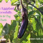 Grow Eggplant Successfully. Win the Bug Battle.