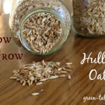 Hulless Oats: How to Grow Them.