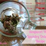Soapwort Laundry Detergent Recipe for Delicates & Regular Wash