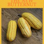 Delicata Squash:  Oh So Delicious. Move Over Butternut