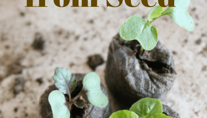 Grow Plants from Seeds.  4 Reasons Why you Should