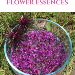 Flower Essences:  The Emotional Blockage Game Changer