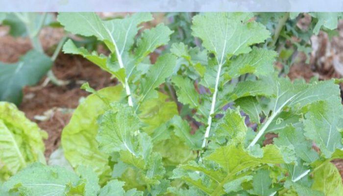 Fall Vegetable Gardening.  Starts at the Beginning of Summer