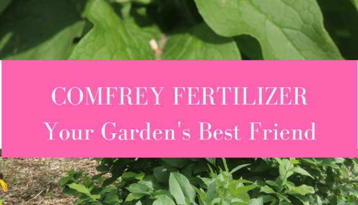 Comfrey Fertilizer:  Your Garden's Best Friend