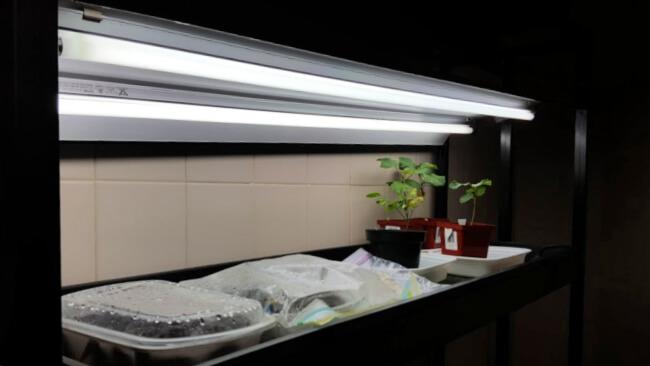Lighting for growing seeds